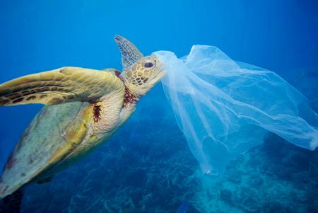 Bando alla plastica monouso: il primo importante passo dell'UE.
